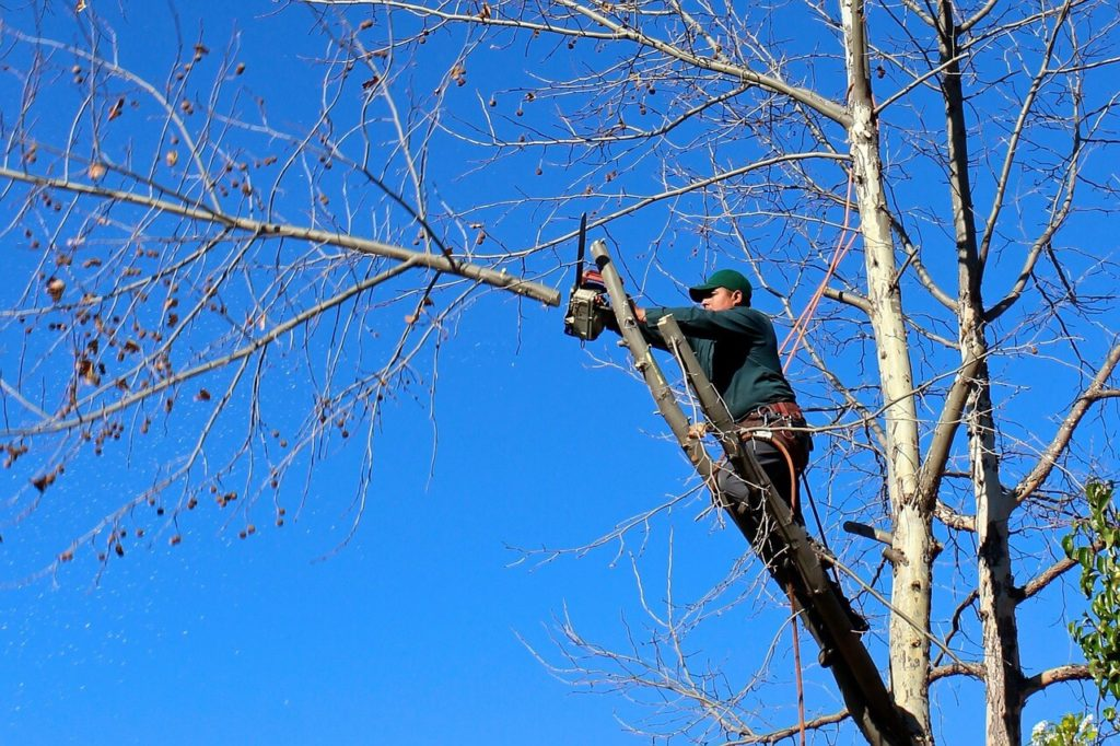 Contact Us-South Miami Heights FL Tree Trimming and Stump Grinding Services-We Offer Tree Trimming Services, Tree Removal, Tree Pruning, Tree Cutting, Residential and Commercial Tree Trimming Services, Storm Damage, Emergency Tree Removal, Land Clearing, Tree Companies, Tree Care Service, Stump Grinding, and we're the Best Tree Trimming Company Near You Guaranteed!