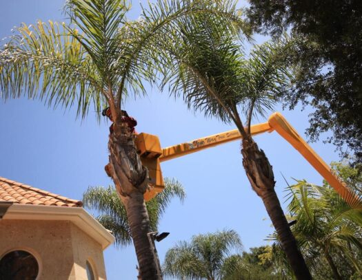 Palm Tree Trimming-South Miami Heights FL Tree Trimming and Stump Grinding Services-We Offer Tree Trimming Services, Tree Removal, Tree Pruning, Tree Cutting, Residential and Commercial Tree Trimming Services, Storm Damage, Emergency Tree Removal, Land Clearing, Tree Companies, Tree Care Service, Stump Grinding, and we're the Best Tree Trimming Company Near You Guaranteed!