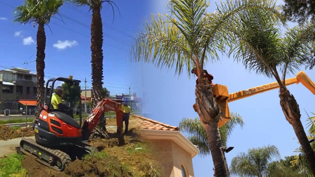 Palm tree trimming & palm tree removal-South Miami Heights FL Tree Trimming and Stump Grinding Services-We Offer Tree Trimming Services, Tree Removal, Tree Pruning, Tree Cutting, Residential and Commercial Tree Trimming Services, Storm Damage, Emergency Tree Removal, Land Clearing, Tree Companies, Tree Care Service, Stump Grinding, and we're the Best Tree Trimming Company Near You Guaranteed!