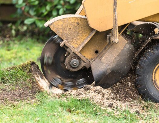 Stump Grinding-South Miami Heights FL Tree Trimming and Stump Grinding Services-We Offer Tree Trimming Services, Tree Removal, Tree Pruning, Tree Cutting, Residential and Commercial Tree Trimming Services, Storm Damage, Emergency Tree Removal, Land Clearing, Tree Companies, Tree Care Service, Stump Grinding, and we're the Best Tree Trimming Company Near You Guaranteed!