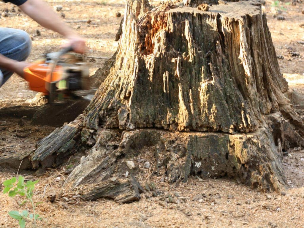 Stump Removal-South Miami Heights FL Tree Trimming and Stump Grinding Services-We Offer Tree Trimming Services, Tree Removal, Tree Pruning, Tree Cutting, Residential and Commercial Tree Trimming Services, Storm Damage, Emergency Tree Removal, Land Clearing, Tree Companies, Tree Care Service, Stump Grinding, and we're the Best Tree Trimming Company Near You Guaranteed!