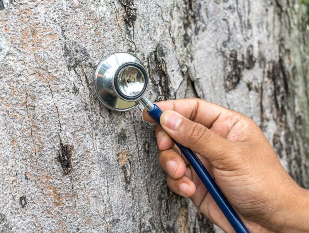 Tree Assessments-South Miami Heights FL Tree Trimming and Stump Grinding Services-We Offer Tree Trimming Services, Tree Removal, Tree Pruning, Tree Cutting, Residential and Commercial Tree Trimming Services, Storm Damage, Emergency Tree Removal, Land Clearing, Tree Companies, Tree Care Service, Stump Grinding, and we're the Best Tree Trimming Company Near You Guaranteed!
