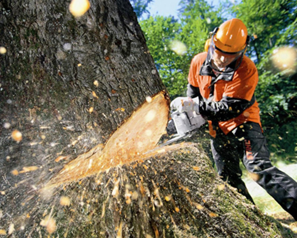 Tree Cutting-South Miami Heights FL Tree Trimming and Stump Grinding Services-We Offer Tree Trimming Services, Tree Removal, Tree Pruning, Tree Cutting, Residential and Commercial Tree Trimming Services, Storm Damage, Emergency Tree Removal, Land Clearing, Tree Companies, Tree Care Service, Stump Grinding, and we're the Best Tree Trimming Company Near You Guaranteed!