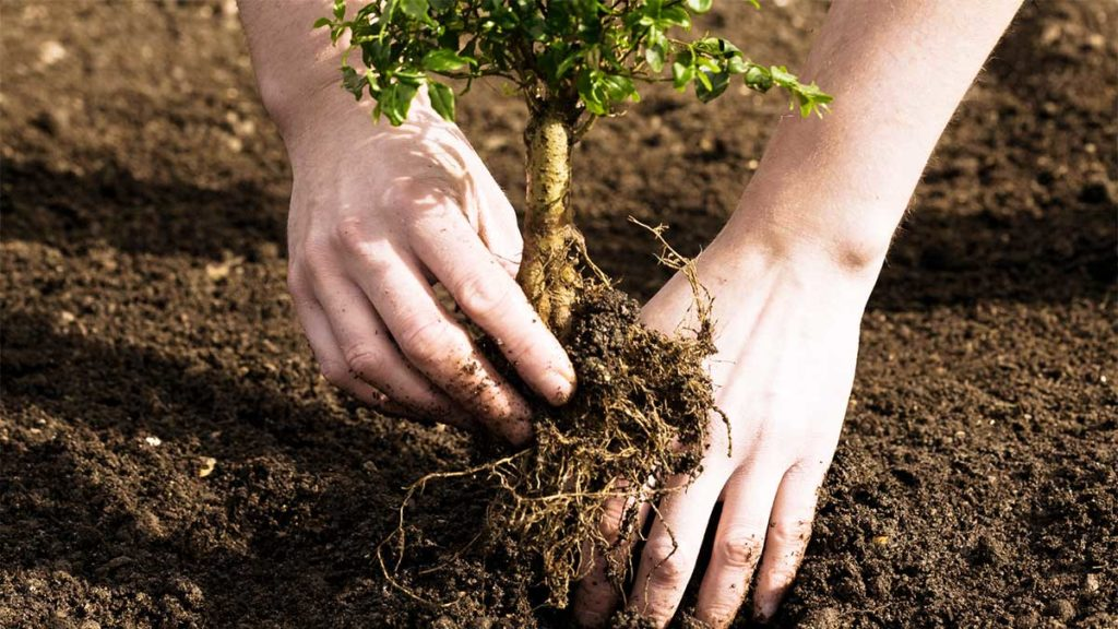 Tree Planting-South Miami Heights FL Tree Trimming and Stump Grinding Services-We Offer Tree Trimming Services, Tree Removal, Tree Pruning, Tree Cutting, Residential and Commercial Tree Trimming Services, Storm Damage, Emergency Tree Removal, Land Clearing, Tree Companies, Tree Care Service, Stump Grinding, and we're the Best Tree Trimming Company Near You Guaranteed!