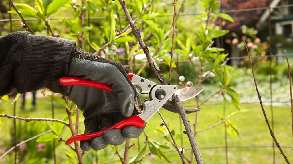 Tree Pruning-South Miami Heights FL Tree Trimming and Stump Grinding Services-We Offer Tree Trimming Services, Tree Removal, Tree Pruning, Tree Cutting, Residential and Commercial Tree Trimming Services, Storm Damage, Emergency Tree Removal, Land Clearing, Tree Companies, Tree Care Service, Stump Grinding, and we're the Best Tree Trimming Company Near You Guaranteed!