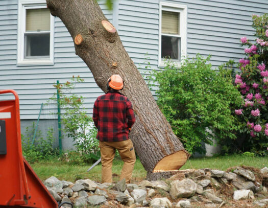 Tree Removal-South Miami Heights FL Tree Trimming and Stump Grinding Services-We Offer Tree Trimming Services, Tree Removal, Tree Pruning, Tree Cutting, Residential and Commercial Tree Trimming Services, Storm Damage, Emergency Tree Removal, Land Clearing, Tree Companies, Tree Care Service, Stump Grinding, and we're the Best Tree Trimming Company Near You Guaranteed!