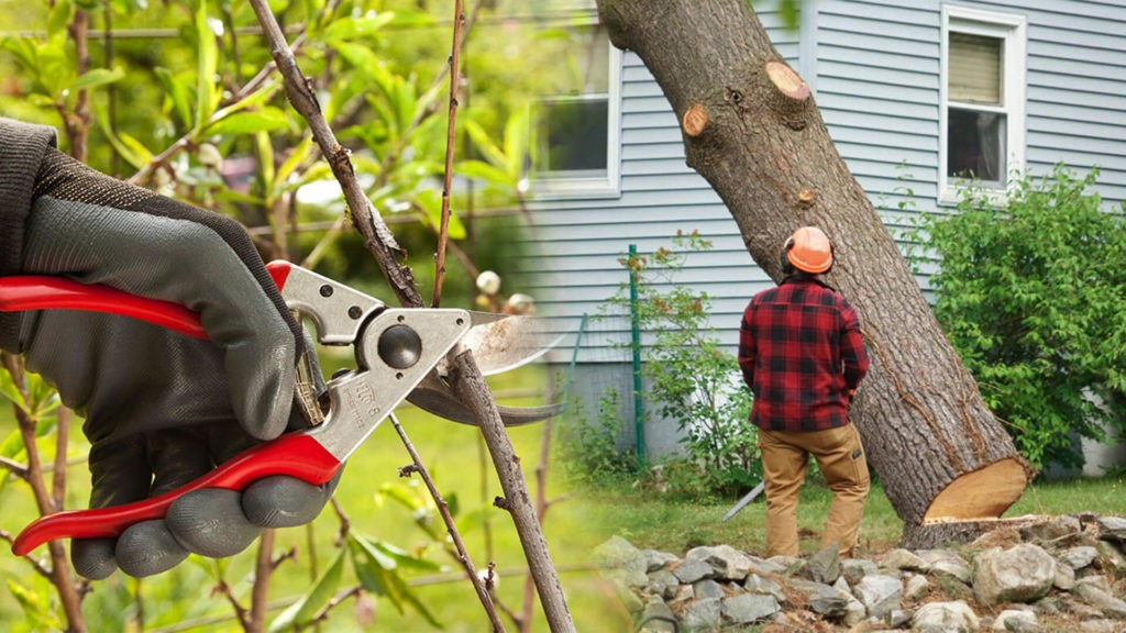 Tree pruning & tree removal-South Miami Heights FL Tree Trimming and Stump Grinding Services-We Offer Tree Trimming Services, Tree Removal, Tree Pruning, Tree Cutting, Residential and Commercial Tree Trimming Services, Storm Damage, Emergency Tree Removal, Land Clearing, Tree Companies, Tree Care Service, Stump Grinding, and we're the Best Tree Trimming Company Near You Guaranteed!